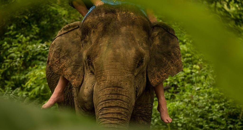elephant-laos-aaron-minks-DH